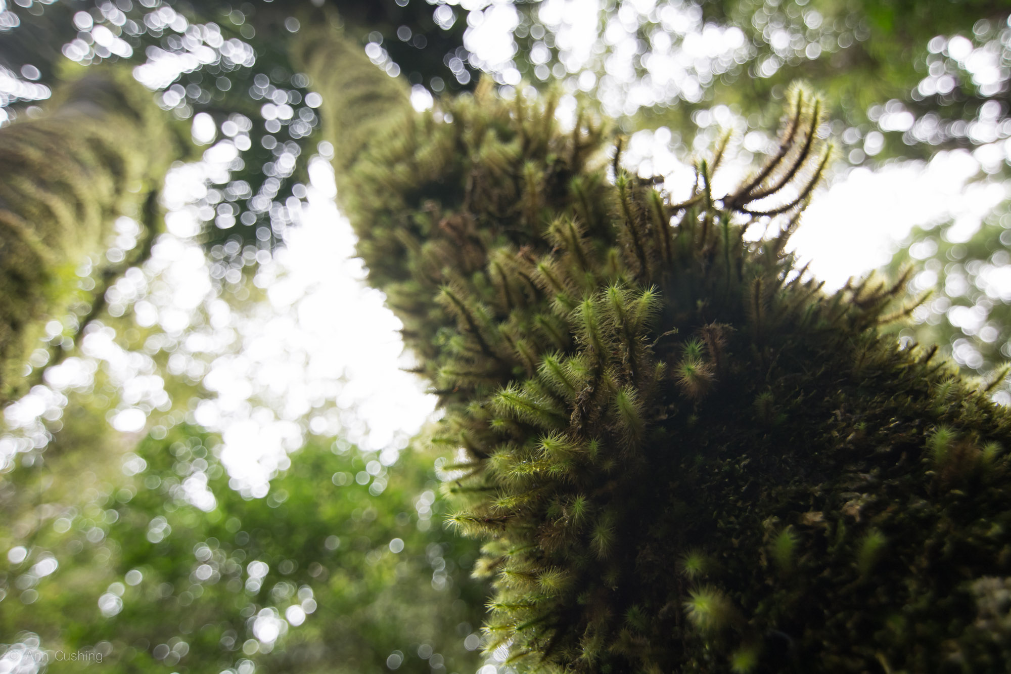 moss on a tree in new zealand